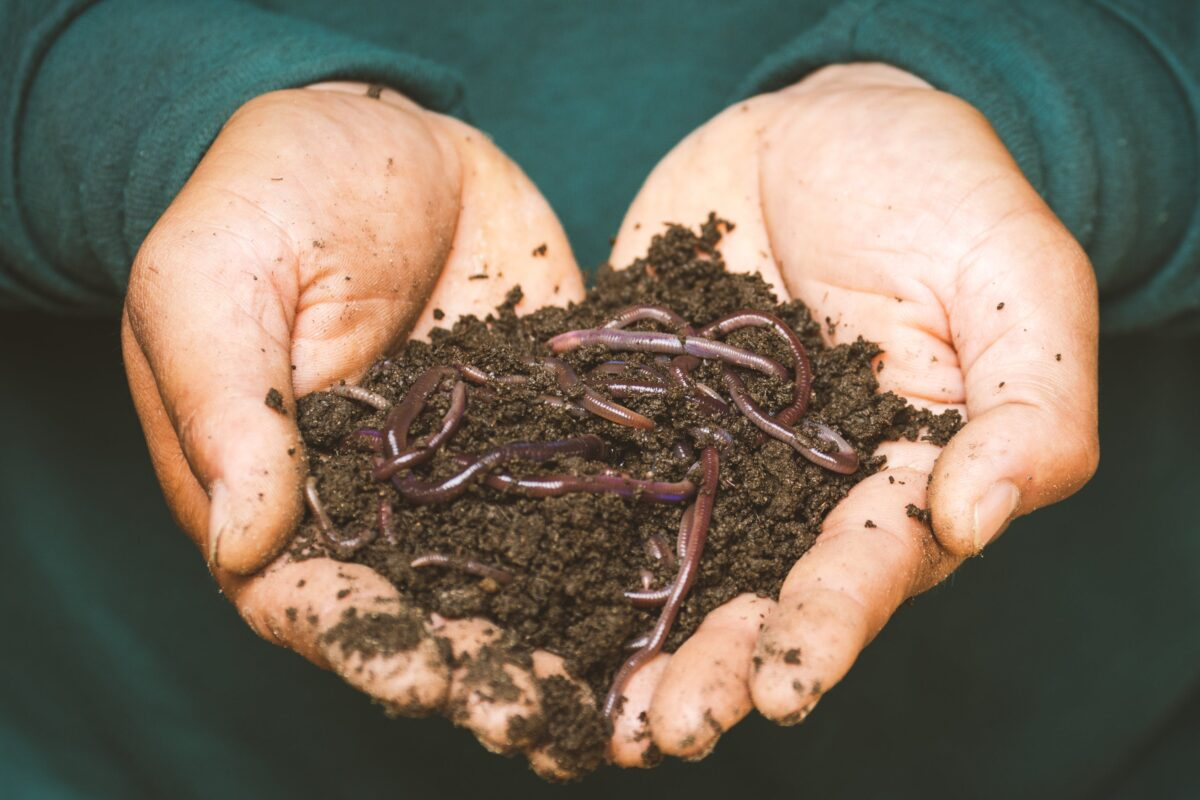 hands full of compost
